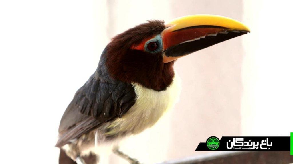 photo 2019 04 26 23 12 42 min 1024x576 - مجموعه گردشگری و رستوران باغ پرندگان قمصر کاشان