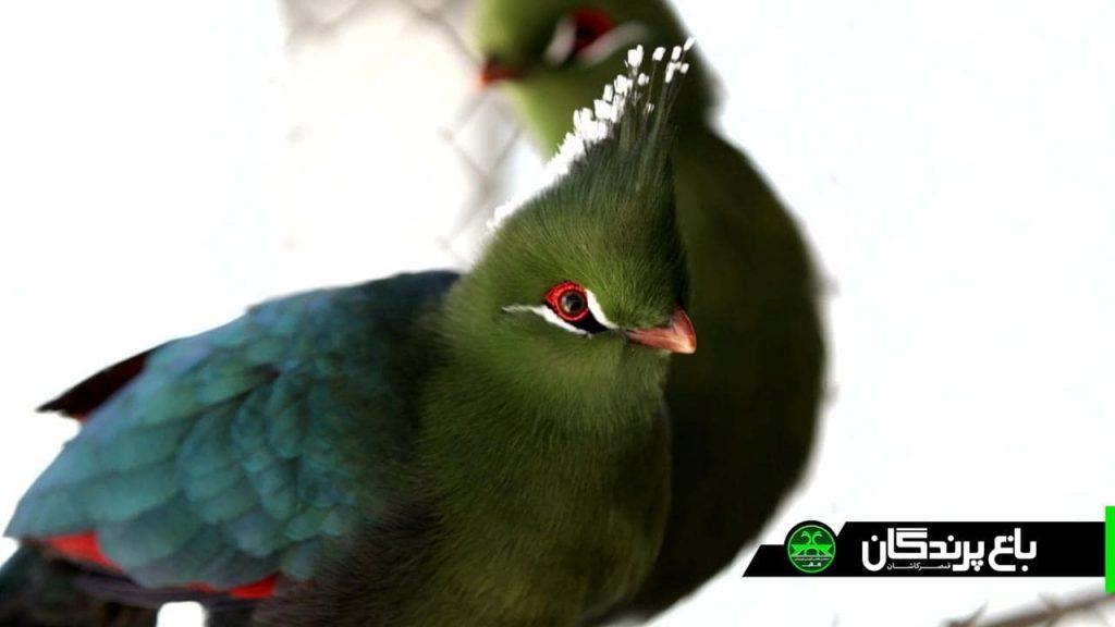 photo 2019 04 26 23 12 53 min 1024x576 - مجموعه گردشگری و رستوران باغ پرندگان قمصر کاشان